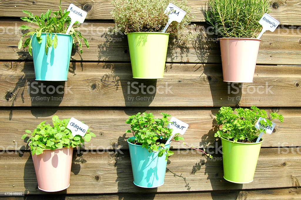 herbs in pot stock photo