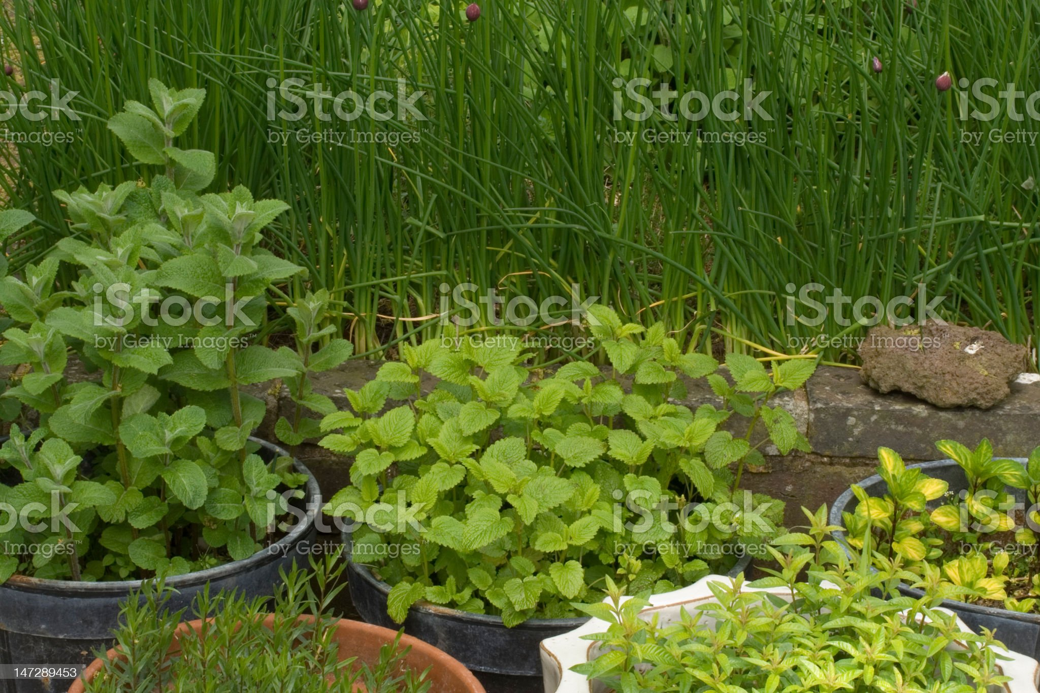 Herbs in pots royalty-free stock photo