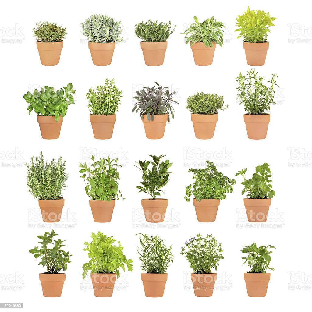 Herbs In Pots stock photo
