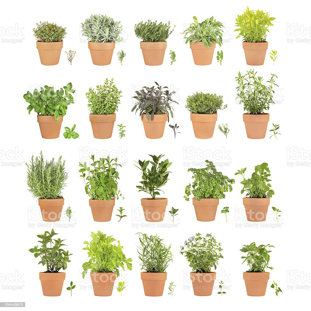 Herbs in Pots with Leaf Sprigs royalty-free stock photo