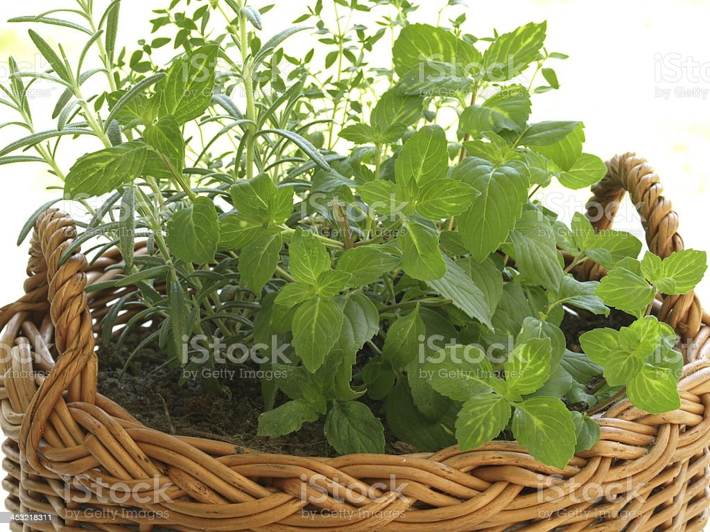 Herbs in wicker basket royalty-free stock photo