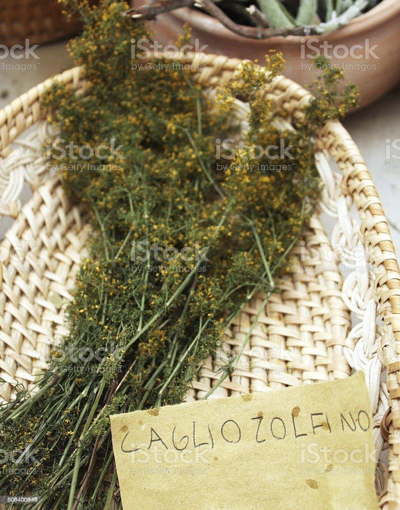 Herbs:  Lady's Bedstraw  (Galium Verum) royalty-free stock photo