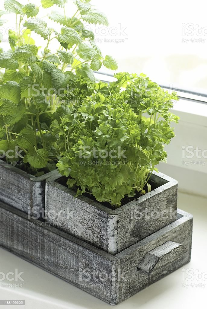Herbs on a window royalty-free stock photo