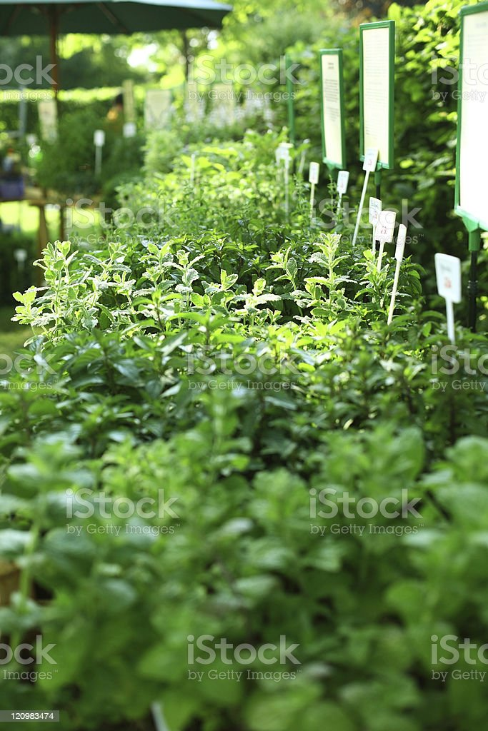 Herbs on the market royalty-free stock photo