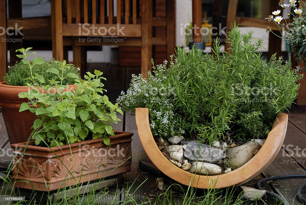 herbs on the patio stock photo