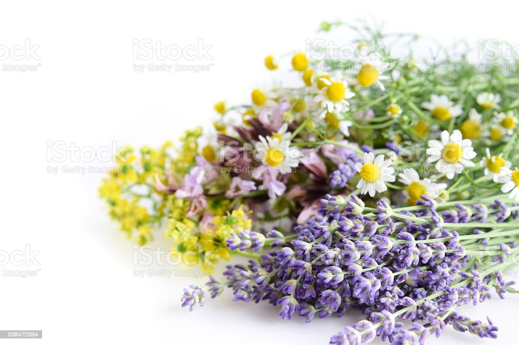 herbs on white background stock photo