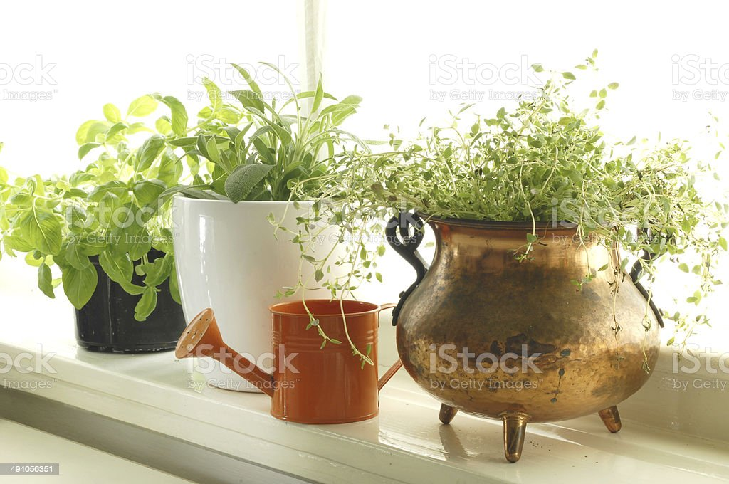 Herbs on window stock photo