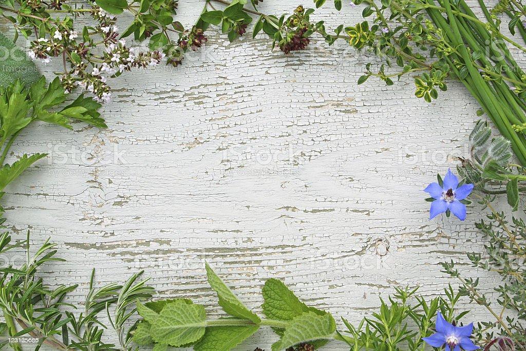 Herbes aromatiques photo libre de droits