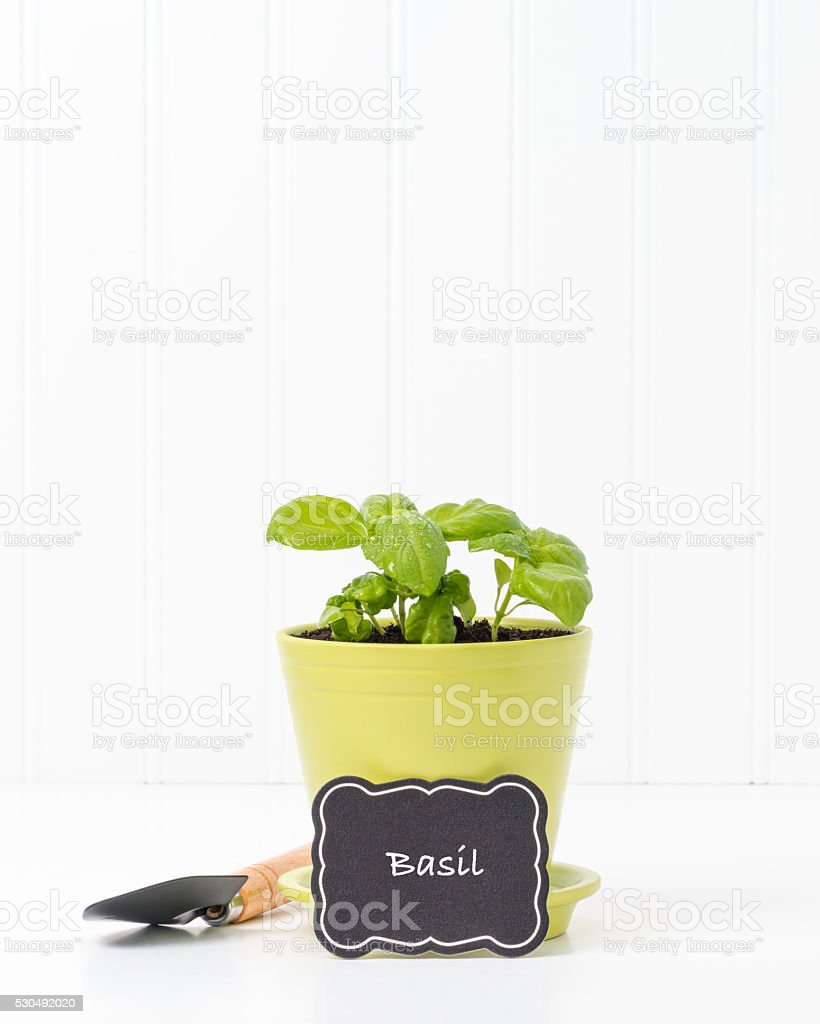 Herbs-Basil stock photo