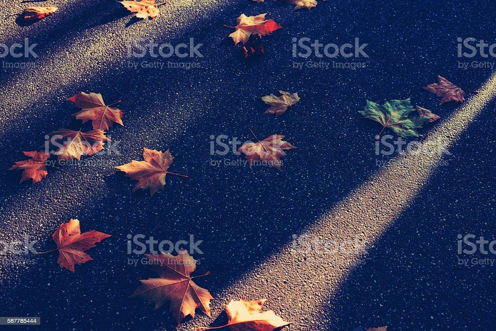 Herbst Blatt stock photo