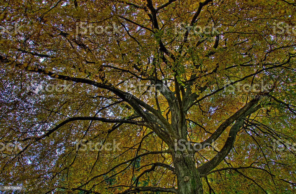 Herbst stock photo