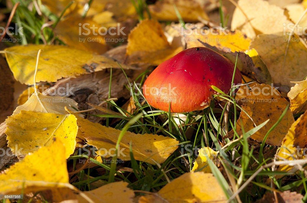 Herbst stock photo