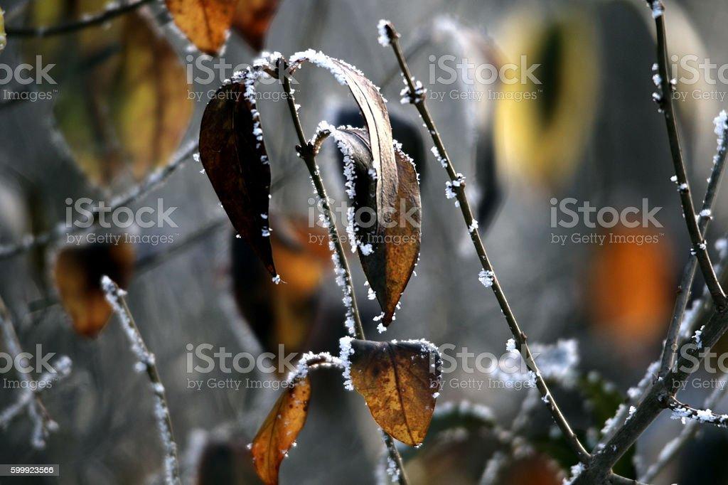 Herbstblätter stock photo