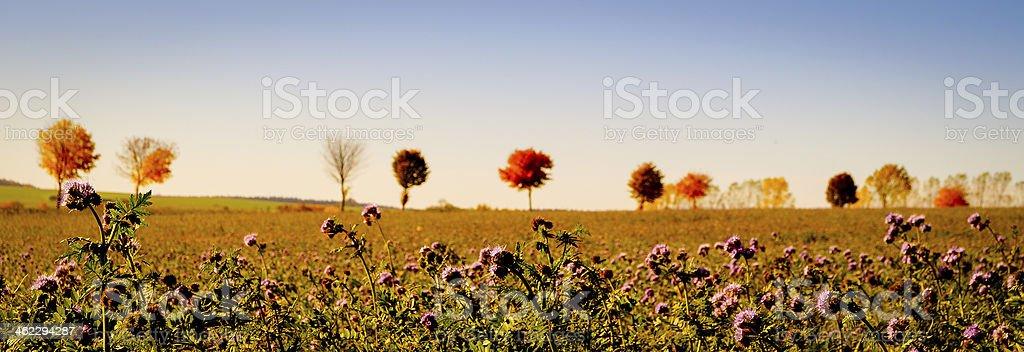 Herbstfeld - Autumn Field stock photo