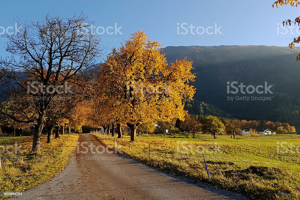 herbstlandschaft stock photo