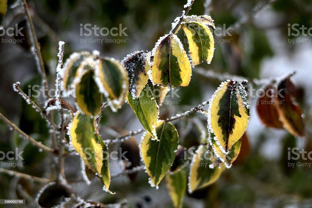 Herbstlaub im Frost stock photo