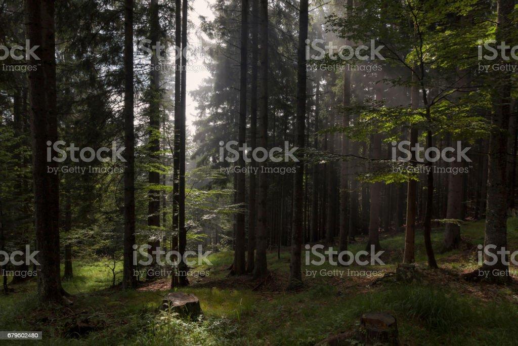 Herbstnebel im Bergwald stock photo