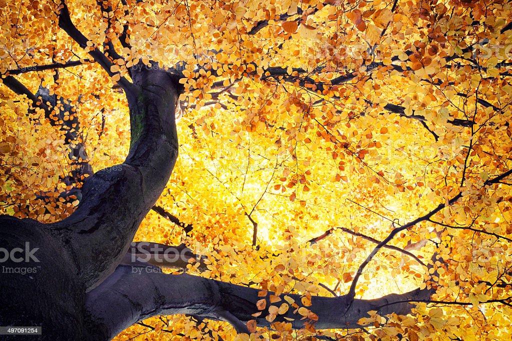 Herbststimmung stock photo