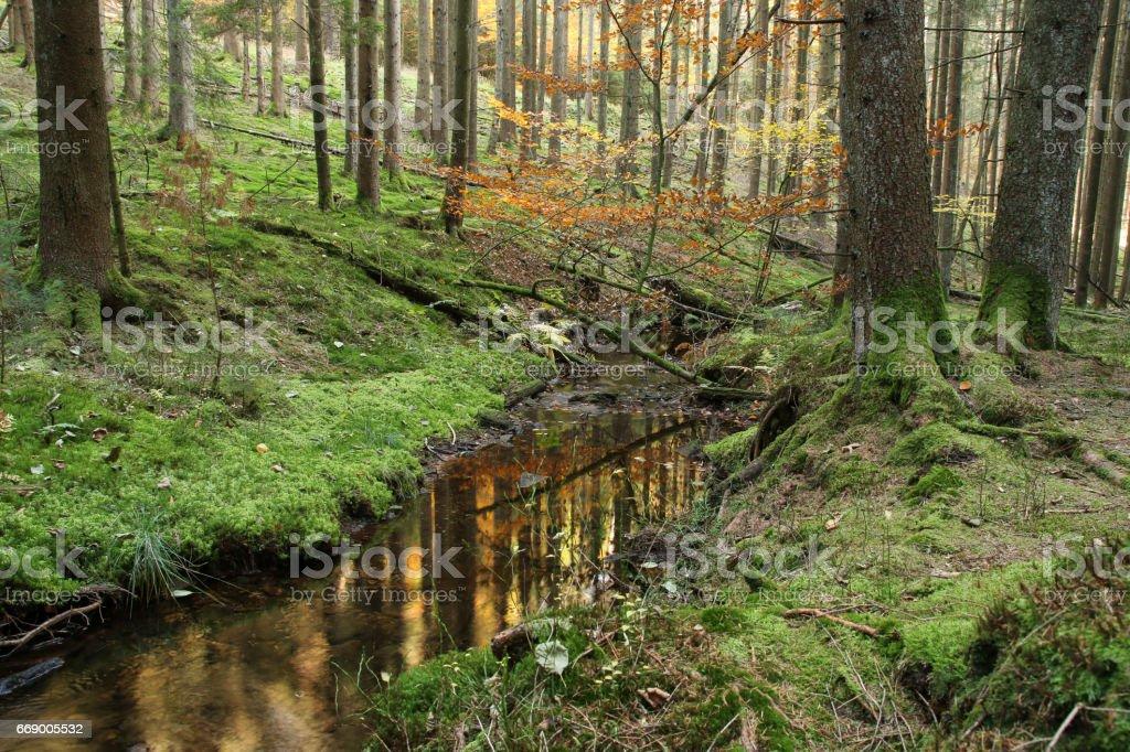 Herbstwald mit Bachlauf stock photo