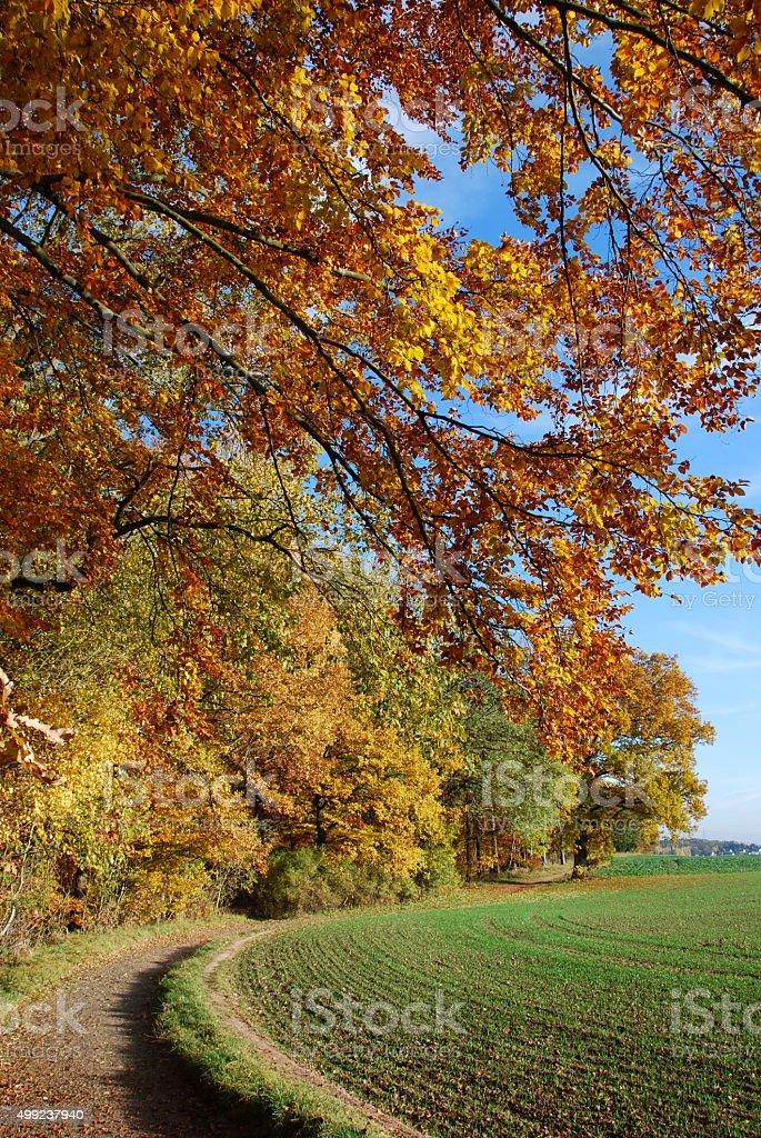 Herbstwald stock photo