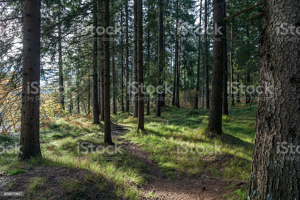 Herbstwald stock photo