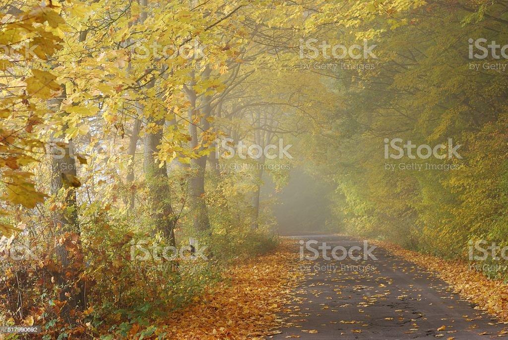 Herbstzeit stock photo