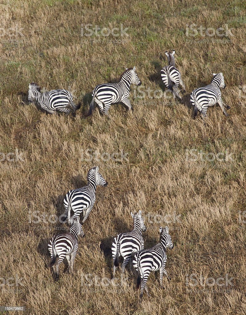 Herd from above. stock photo