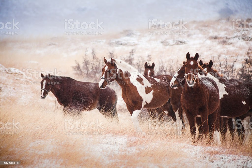 herd in the snow-covered hills stock photo