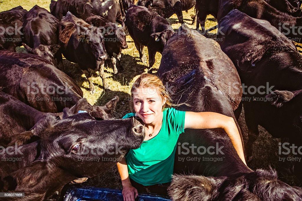 Herd of Black Angus Cattle Surrounding Female Rancher stock photo