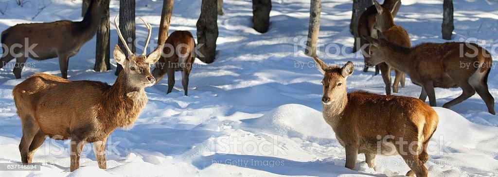 herd of deer in forest stock photo