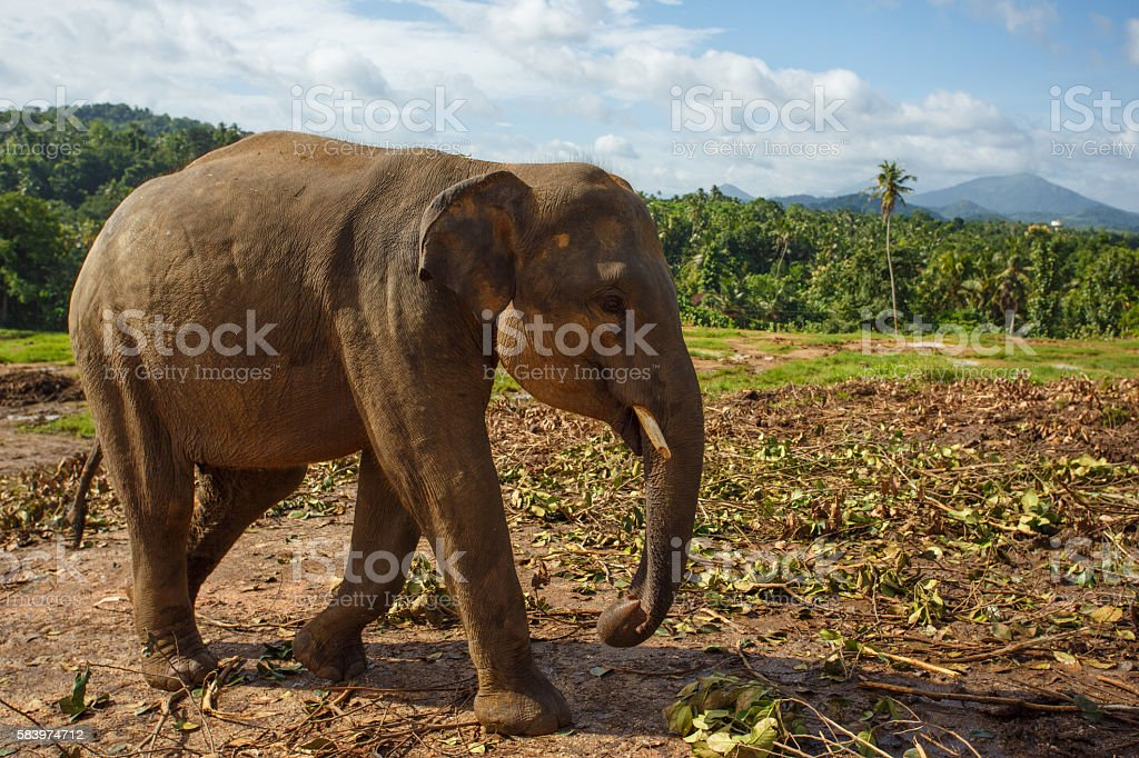 Herd of elephants in the nature stock photo
