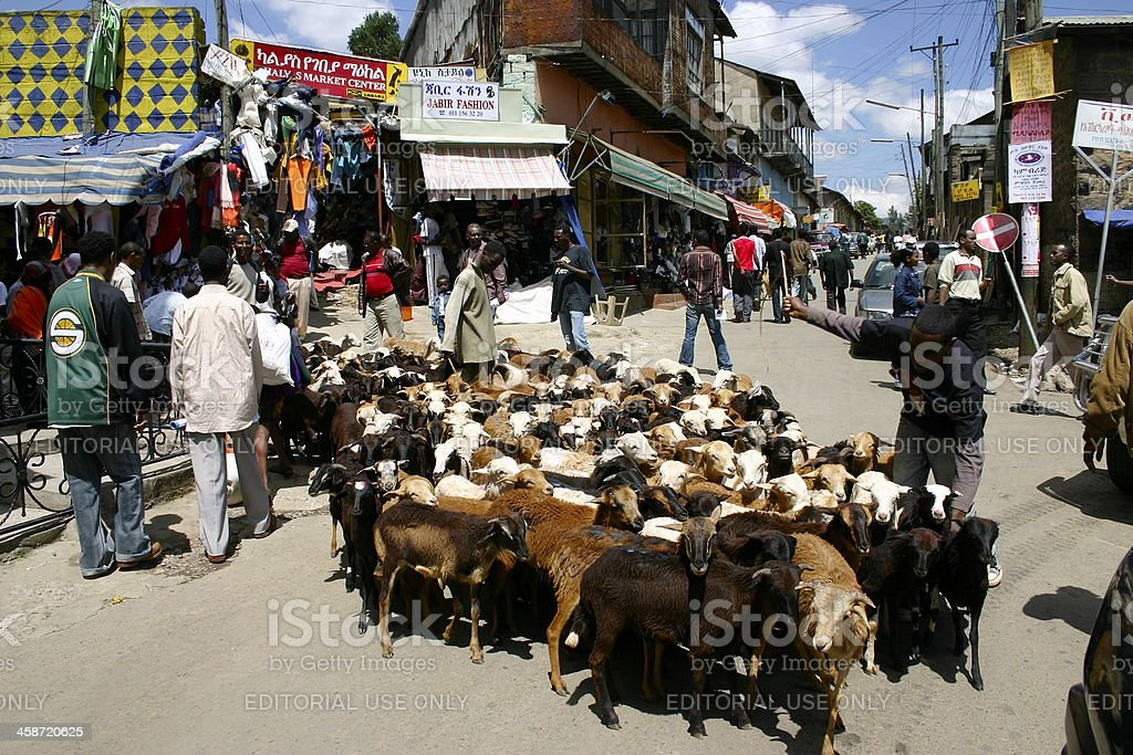 Herd of goats on a market street in Addis Ababa stock photo