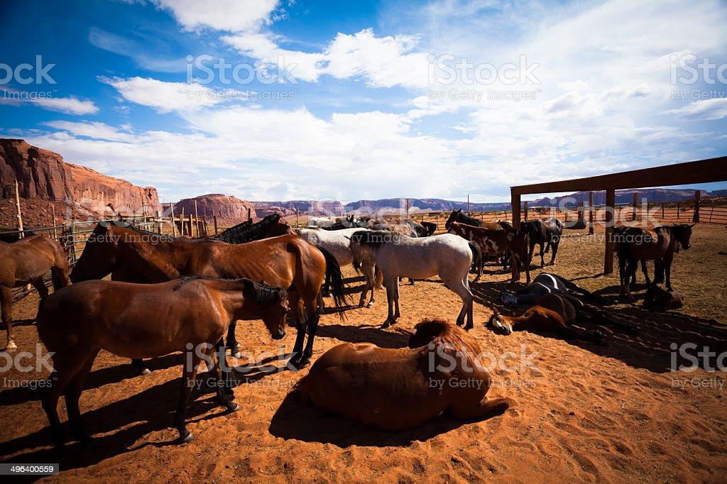 Herd of Horses at Monument Valley, Arizona, USA royalty-free stock photo