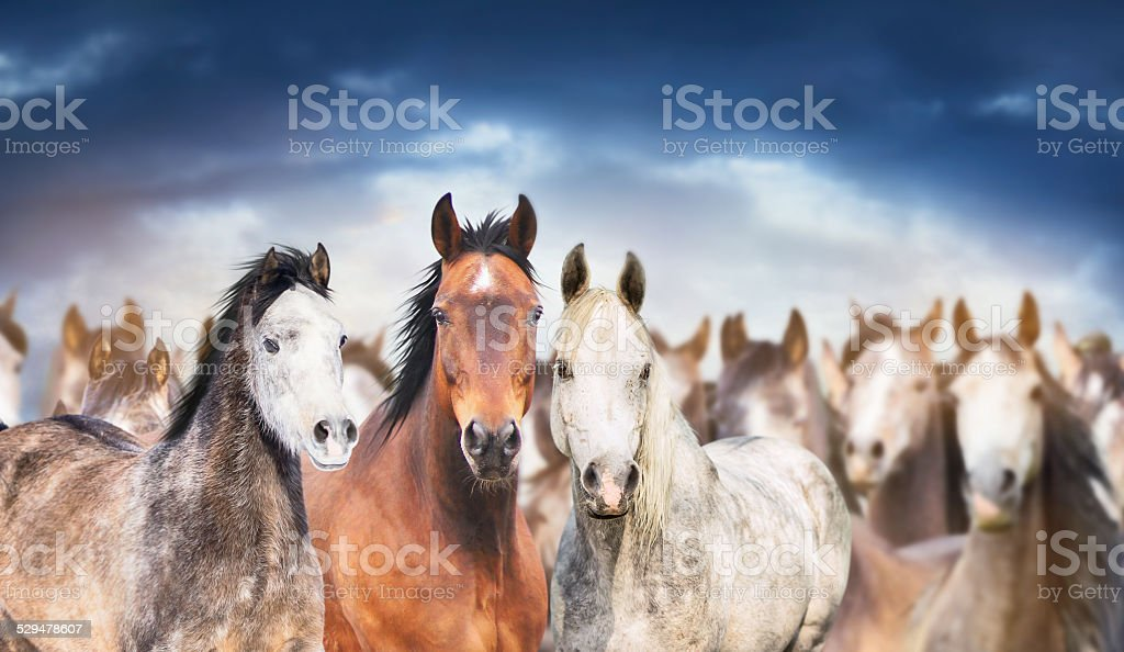 herd of horses close up , against cloudy sky, banner stock photo