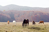 Herd of horses grazing free on the field