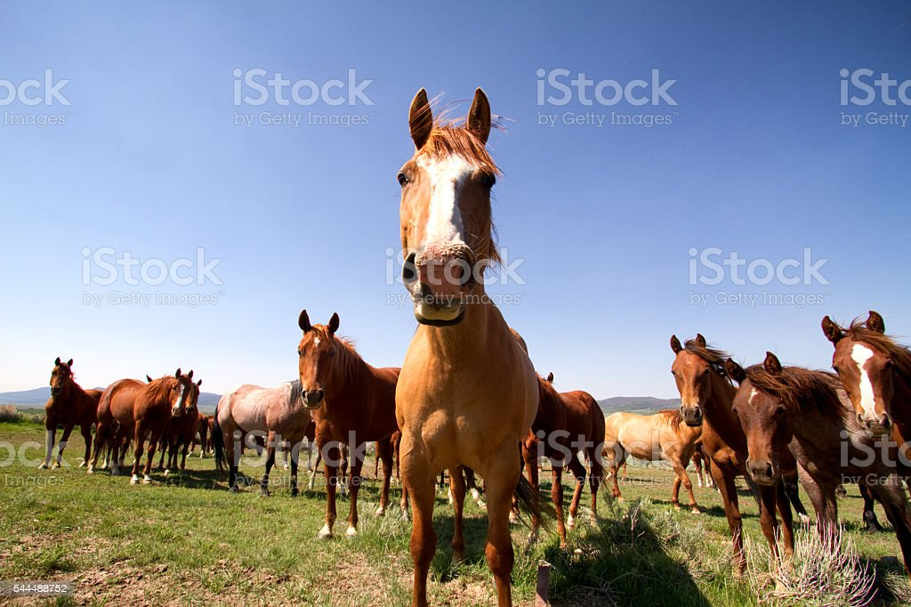 Herd Of Horses In A Desert Pasture stock photo