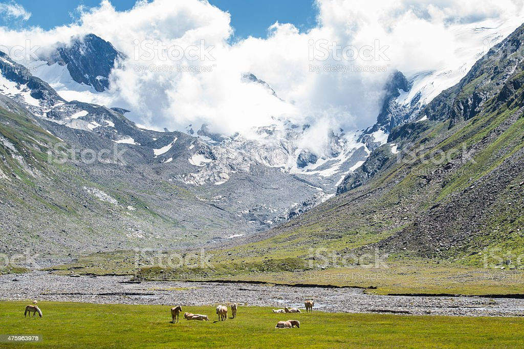Herd of horses in alpine mountain landscape stock photo