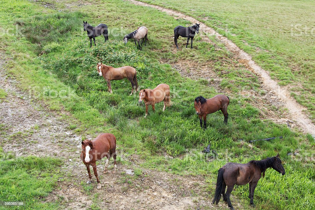 Herd of horses on a mountain pasture. stock photo
