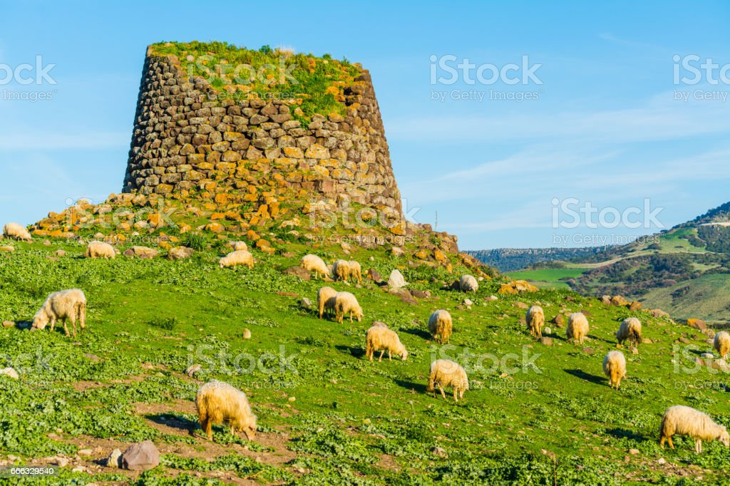 Herd of sheep by a Nuraghe stock photo