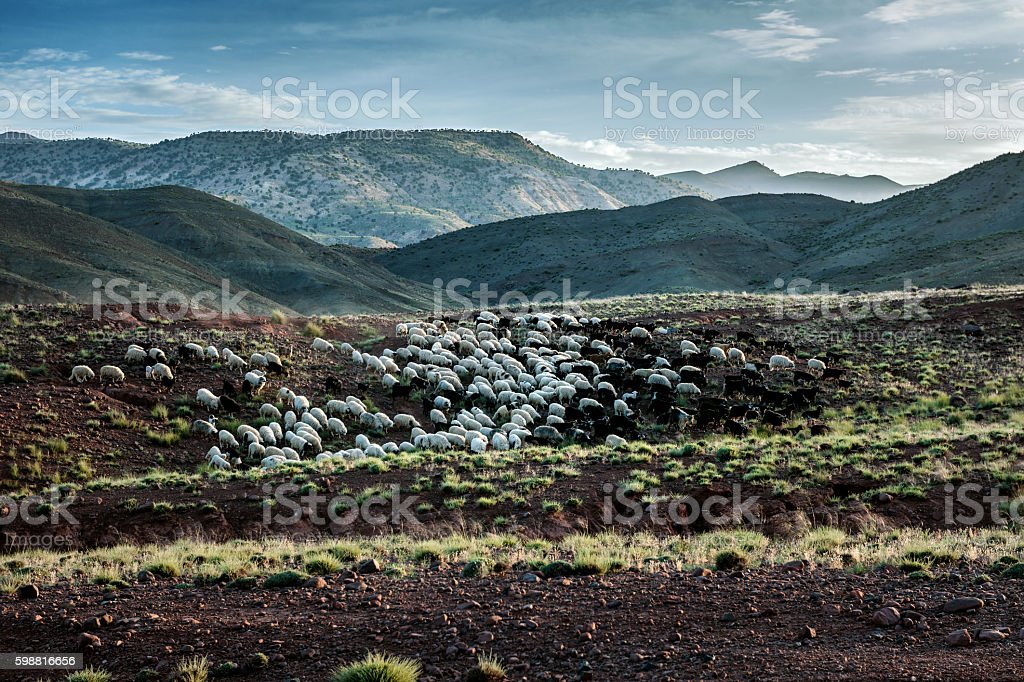 Herd of sheep on the mountains of the Atlas ,Morocco stock photo