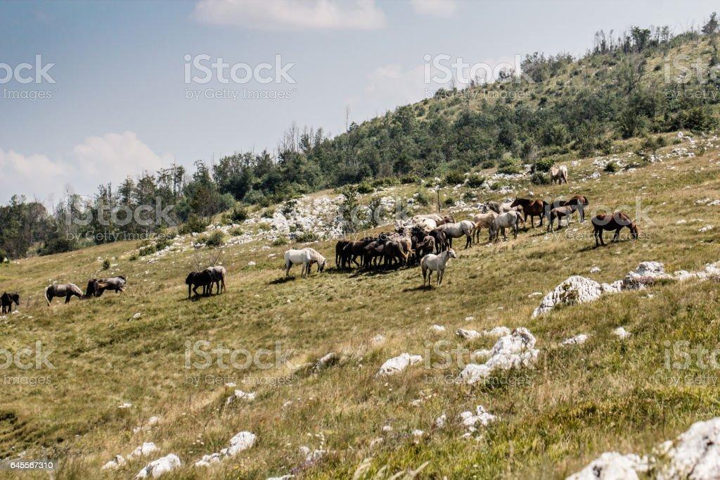 Herd of wild horses in beautiful western like mountain landscape stock photo