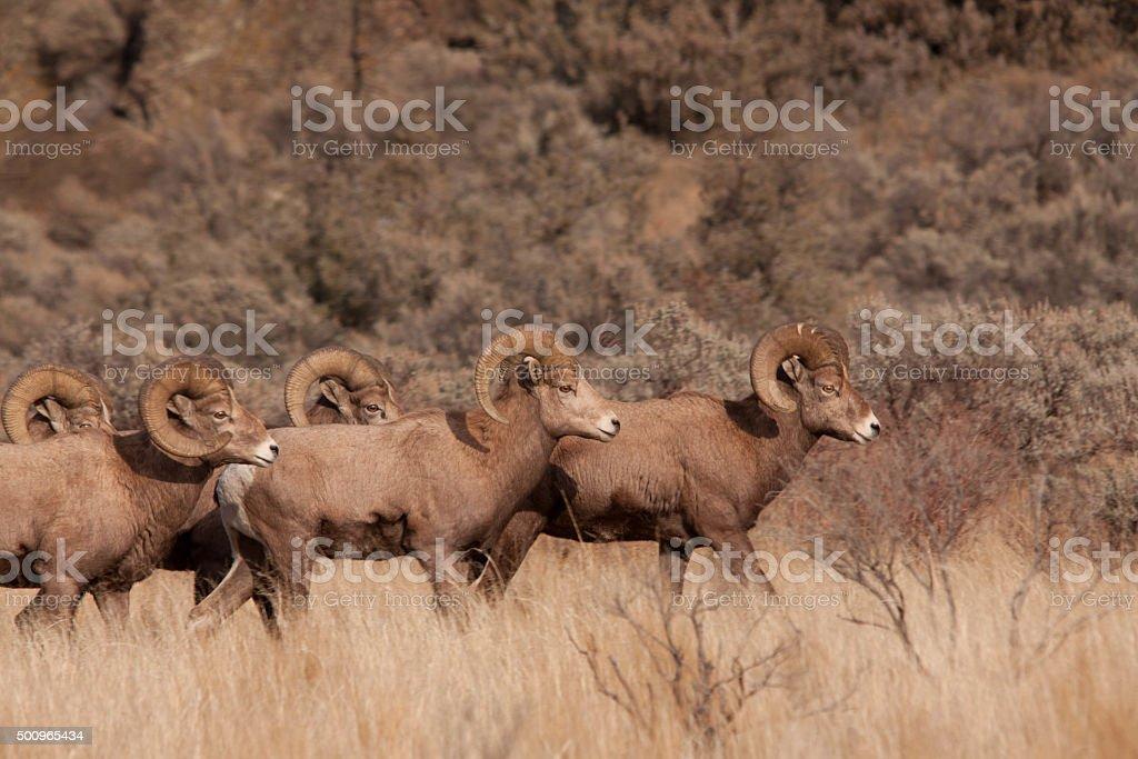 Herd on the Move stock photo