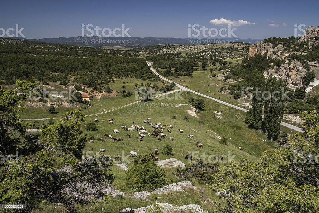 Herd on the Phrygia Valley in Yazilikaya,Eski?ehir. stock photo