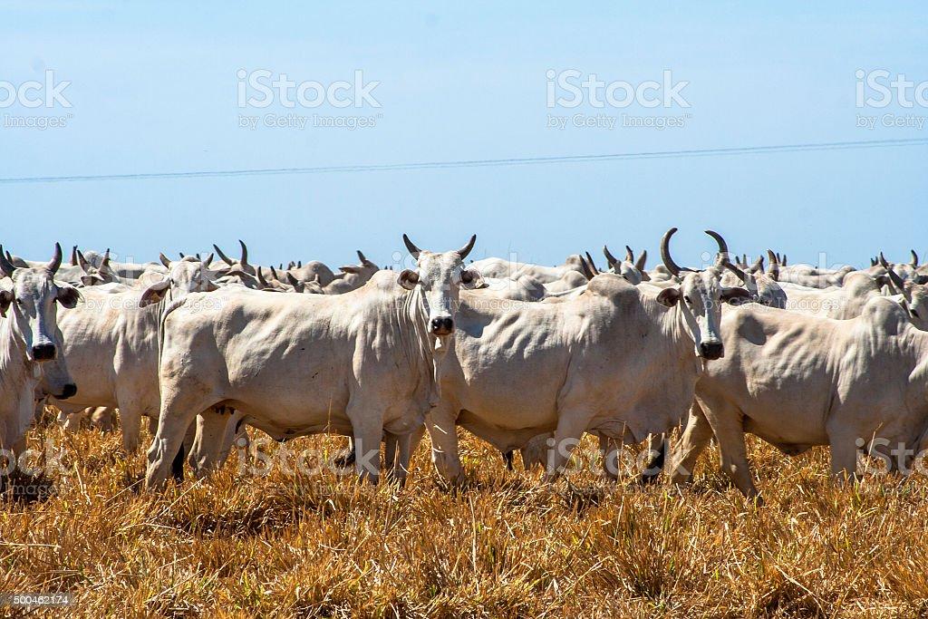 Herd stock photo