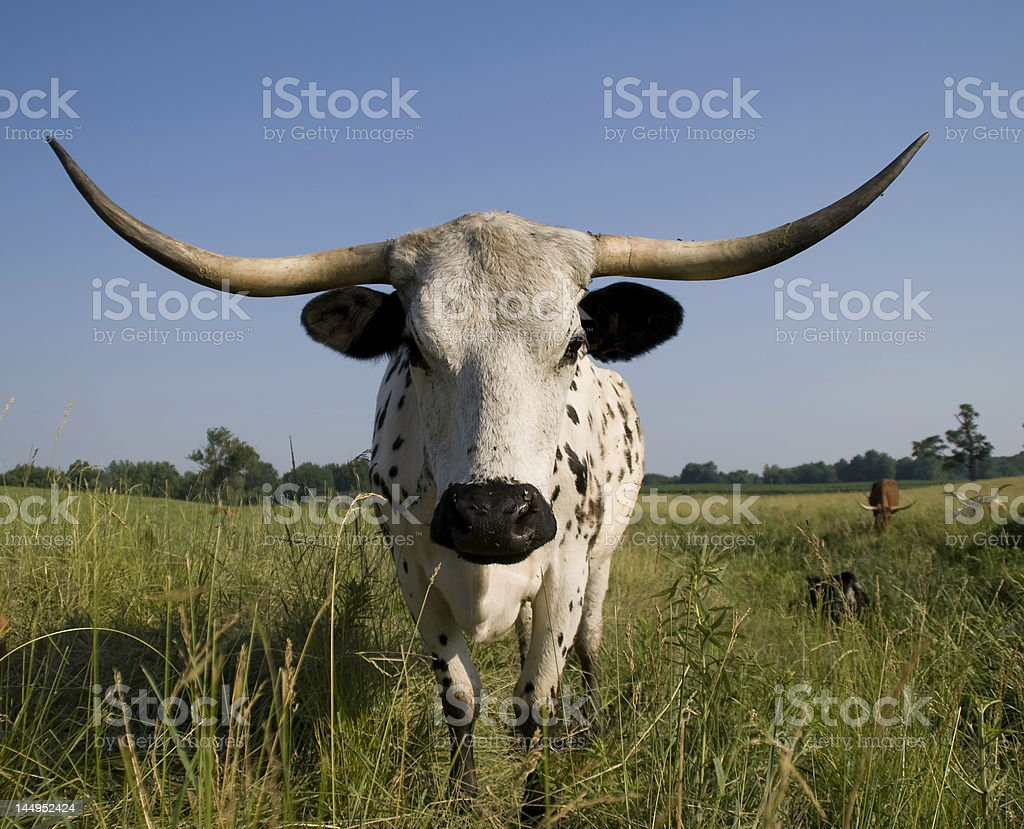 Herd_Guard royalty-free stock photo