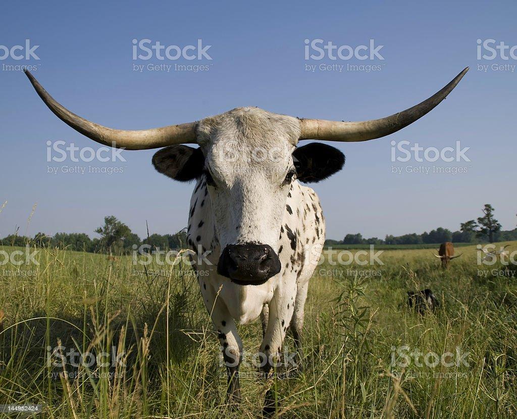 Herd_Guard stock photo