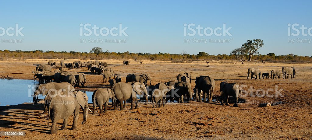 Herds of elephants at a waterhole stock photo