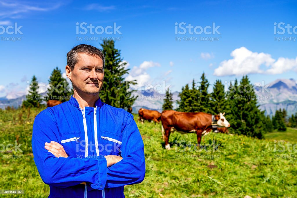 Herdsman and cows stock photo
