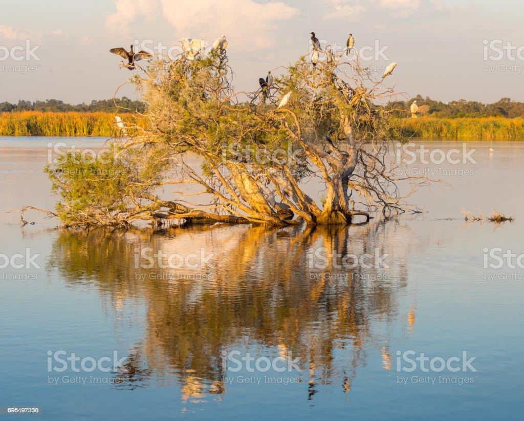 Herdsman Lake Tree stock photo