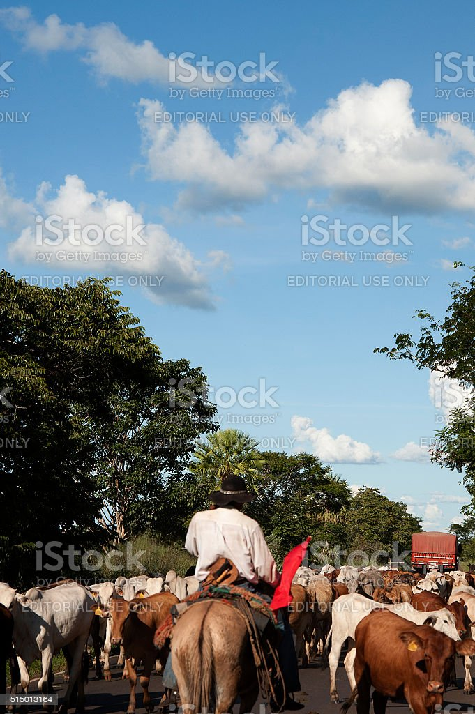 Herdsman stock photo